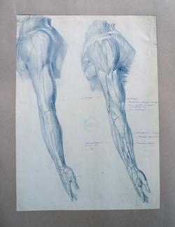 Rysunek anatomiczny wykonany przezJacka Malczewskiego. Fot.A. Wojnar